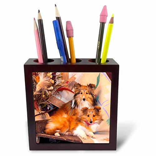 3dRose ph_209141_1 Shetland Sheepdogs Tile Pen Holder, 5