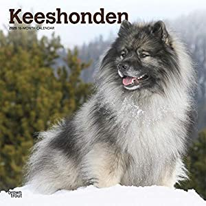 Calendars Keeshonden Wall Calendar - Full Color Pages All Major & Significant Holidays 4