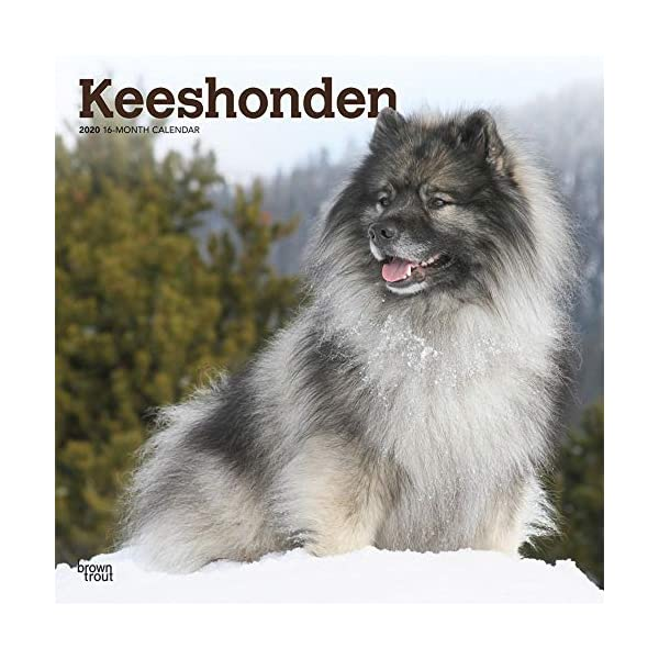 Calendars Keeshonden Wall Calendar - Full Color Pages All Major & Significant Holidays 1