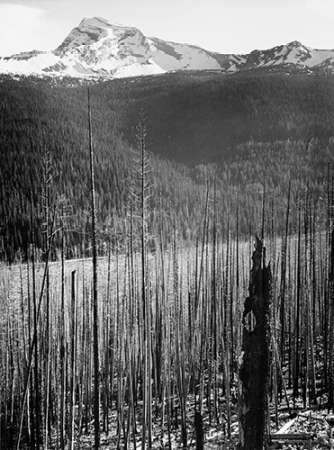 Posterazzi Burned Area Glacier Montana-National Parks and Monuments 1941 by Ansel Adams Poster Print, 18
