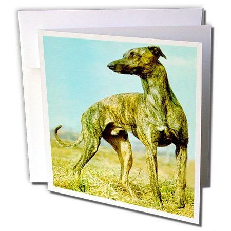 Dogs Greyhound - Brindle Greyhound - 6 Greeting Cards with envelopes (gc_484_1) ()