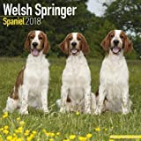 Welsh Springer Spaniel Calendar - Dog Breed Calendars - 2017 - 2018 wall Calendars - 16 Month by Avonside