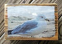 Seagull by Boardwalked