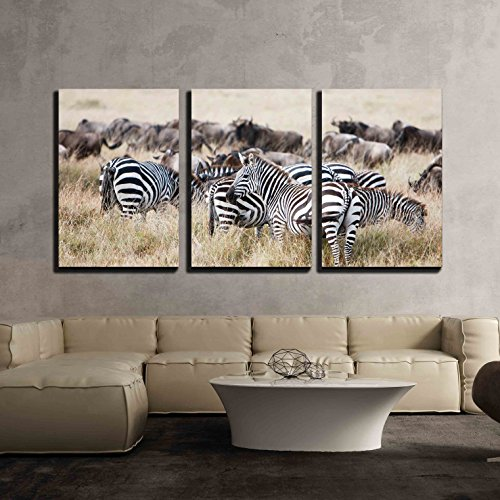 Herd of Wildebeest and Zebra Grazing Together on Grasslands of African Savanna x3 Panels