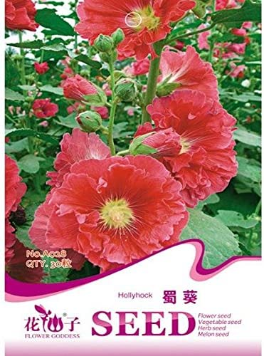 Paleo Alcea rosea malvarrosa Semillas flores y plantas de jardín Seeds 30pcs: Amazon.es: Hogar