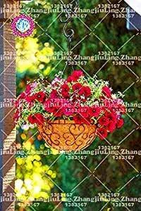 Zoomy Far 7: 100pcs colgantes Semillas Picotee correhuela, semillas, semillas de petunia raras Bonsai flor, semilla para jardín interior 7