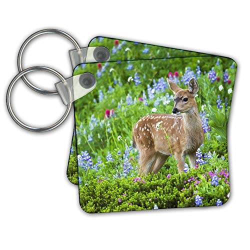 (3dRose Danita Delimont - Deer - Black-tail Deer Fawn, Cascade Wildflowers - set of 4 Key Chains (kc_315167_2))