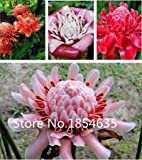 Promotion! 100 Torch ginger Seeds 9 different Colors Flower Seeds High Quality DIY Garen Perennial Blooming Plants Flowers