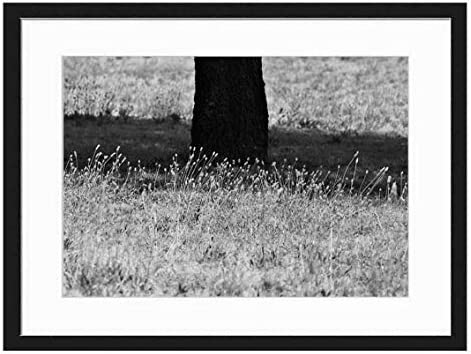 Amazon Com Wood Framed Canvas Artwork Home Decore Wall Art Black White 20x14 Inch Grass Tufts Tree Trunk Grass Short Dry Tufts Posters Prints Skip to main search results. amazon com