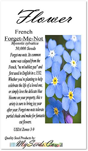 BIG PACK - (50,000) FRENCH FORGET ME NOT, Myosotis sylvatica Flower Seeds - PERENNIAL ZONE 3-9 - Flower Seeds By MySeeds.Co (BIG PACK - Forget Me Not)