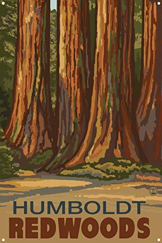Humboldt Redwoods California Trees Metal Art Print by Paul A. Lanquist (12