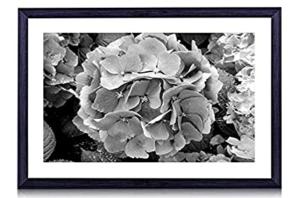 a1510f40c3e Image Unavailable. Image not available for. Color  Hydrangea Blue Flowers - Art  Print Black Wood Framed ...
