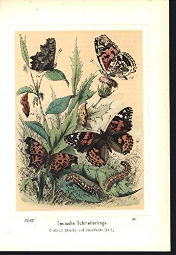 german-butterflies-chrysalis-pupa-caterpillar-1882-old-color-lithograph-print
