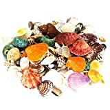135 PCS Sea Shells Mixed Beach Seashells Starfish, Colorful Natural Seashells Perfect Accents for Candle Making,Home Decorations, Beach Theme Party Wedding Décor, Fish Tank and Vase Fillers