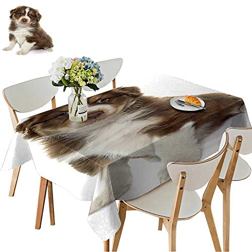 UHOO2018 Polyester Square/Rectangle Puppy Australian Shepherd in Front of White Background Kitchen Washable,54 x120inch.