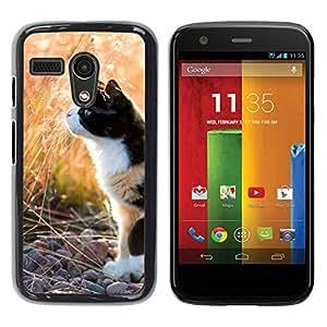 YiPhone /// Prima de resorte delgada de la cubierta del caso de Shell Armor - Munchkin Shorthair Bobtail American - Motorola Moto G 1 1ST Gen I X1032