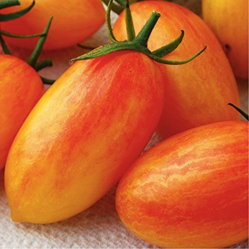 Organic Artisan Blush Tomato (Lycopersicon Esculentum Mill) Vegetable Heirloom Seeds, Indeterminate, NEW