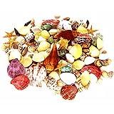 170 PCS Sea Shells Mixed Beach Seashells Starfish - Best Reviews Guide