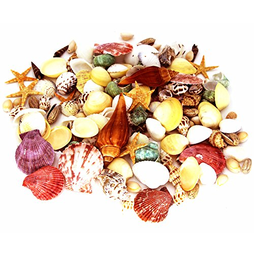 170 PCS Sea Shells Mixed Beach Seashells Starfish, Colorful Natural Seashells Approx.1 Lb Perfect Accent for Candle Making, Home Decoration, Beach Theme Party Wedding Décor, Fish Tank and Vase Filler (Mini Beach Natural Shells)