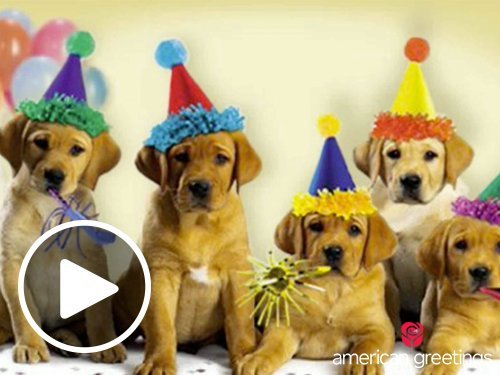 Animated - Happy Birthday Dogs link image