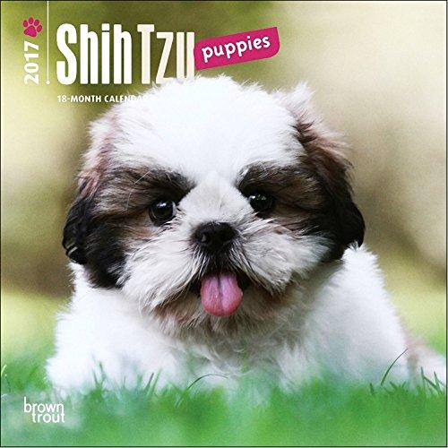 Shih Tzu Puppies Mini Calendar 2017 - Deluxe Small Wall Calendar (7x7)