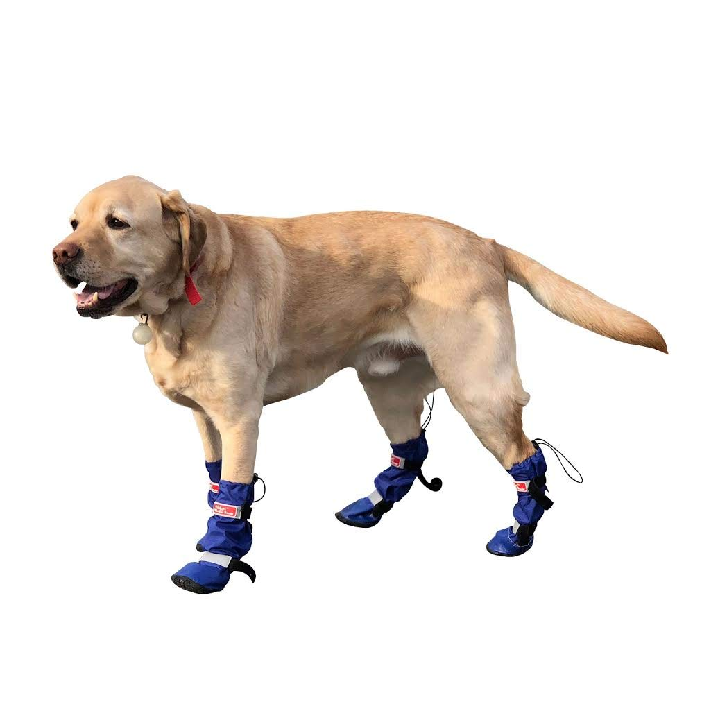 Walkin' All Weather Dog Boots - Set of 4 by Walkin'