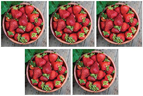 Burpee 'Seascape' Ever-Bearing Strawberry Shipped as 25 Bare Root Plants (Fіvе Расk) by  (Image #7)