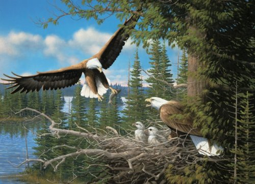 Used, Cobble Hill Nesting Eagles Jigsaw Puzzle (1000 Piece) for sale  Delivered anywhere in USA