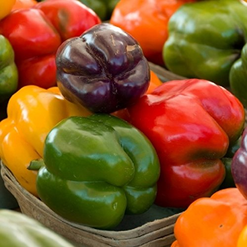 David's Garden Seeds Pepper Bell Rainbow Blend SVPEP171 (Multi) 50 Open Pollinated Seeds (Rainbow Blend)