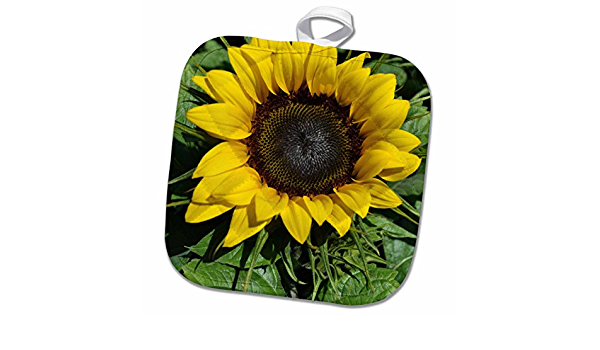Amazon Com 3d Rose Sunflower Pot Holder 8 X 8 Home Kitchen