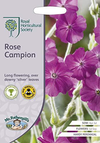 Rhs Rose - mr fothergills - Flower - RHS Rose Campion - 500 Seeds