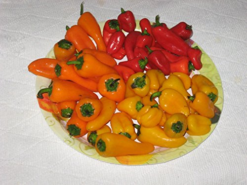 (Sweetest Red,yellow,orange Mini Bell Pepper Seeds (20 Seeds ) Strawberry Sweet)