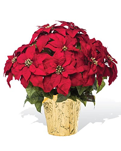 PETALS - Large Premier Silk Poinsettia - Handcrafted - Amazingly Lifelike - 23 x 22 Inches (Red) (Prices Poinsettia)