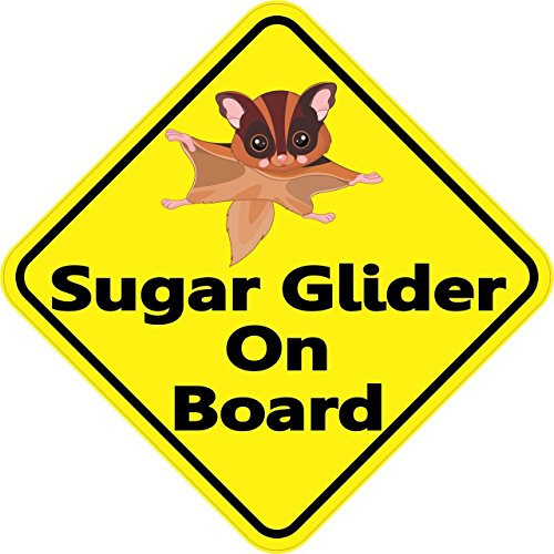 "4.5""x4.5"" Sugar Glider On Board Bumper Sticker Decal Window Vinyl Stickers Decals"