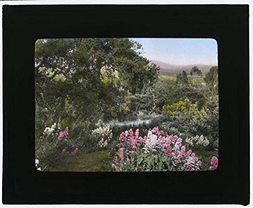 (1917 Photo