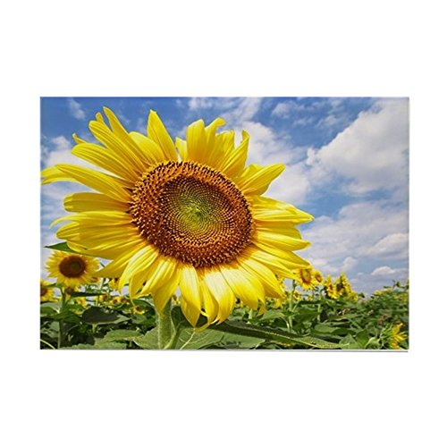 CafePress Sunflower Garden Magnets Rectangle Magnet, 2
