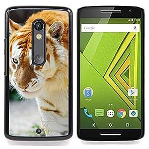 - Albino Tiger - - Cubierta del caso de impacto con el patr??n Art Designs FOR Motorola Verizon DROID MAXX 2 / Moto X Play Queen Pattern