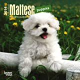 Maltese Puppies 18-Month 2014 Calendar (Multilingual Edition)
