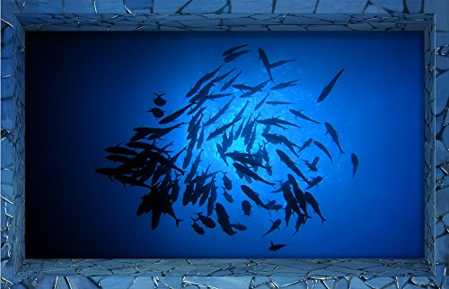 fishes dark blue ocean sea