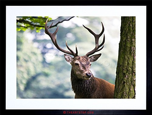NATURE ANIMAL PORTRAIT DEER STAG ANTLERS Framed Wall Art Wall Picture Frames Wall Decor Pictures for Living Room Bedroom Office 30x40 cm