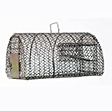 AVM™ Premium Quality Humane Live Small Animal Trap Cage for Chipmunk, Mouse, Rat