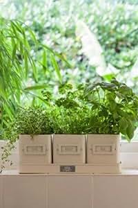 Best Christmas gift -Burgon & Ball Jersey Cream Enamel Herb-Pots-in-a-Tray