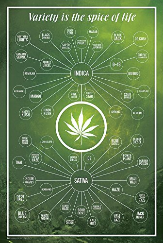 Cannabis-Variety-Is-The-Spice-Of-Life-Poster-24-x-36in