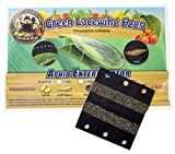 Bug Sales Green Lacewing Eggs on Hanging Card - 1000 Count