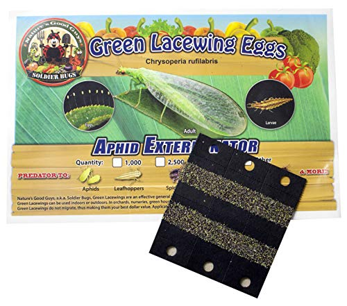 Bug Sales Green Lacewing Eggs on Hanging Card - 1000 Count]()