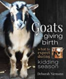 Goats Giving Birth: What to Expect during Kidding