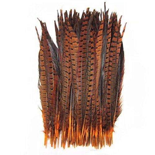 Celine lin 10PCS Natural Pheasant Feathers Pheasant Tails 14-16inch(35-40CM),Orange