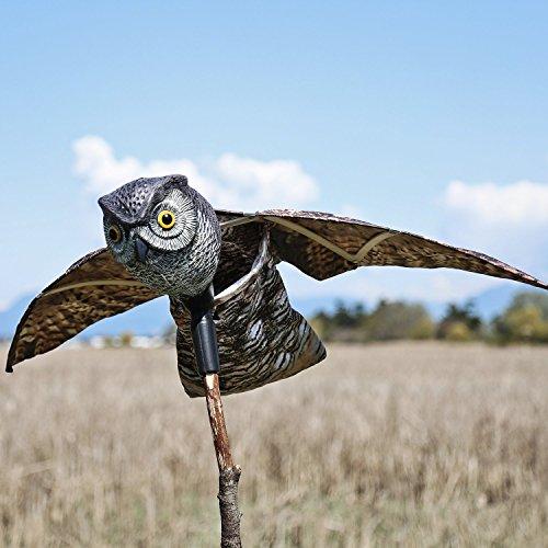 owl pest control - 2