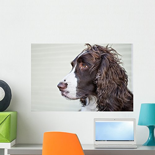 Portrait English Springer Spaniel Wall Mural by Wallmonkeys Peel and Stick Graphic (24 in W x 16 in H) WM249886