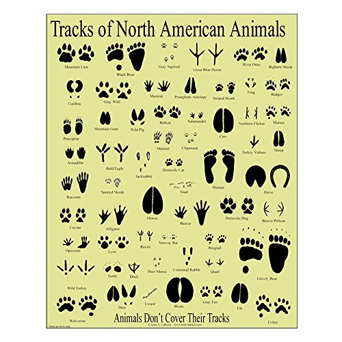 CafePress - Small Animal Tracks Poster - 16